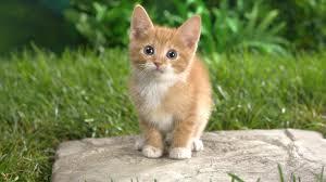 猫「カフ..カフッ..カフッ!カフッ!!カフッ!!!カフッ!!!」俺「?!」