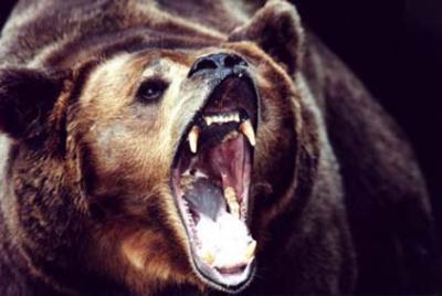 【閲覧注意】「三毛別熊事件」みたいな怖い事件教えてくれ!!!!