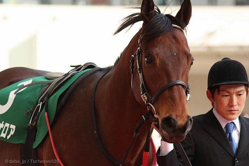 安田記念は経験上どの馬が勝つの?