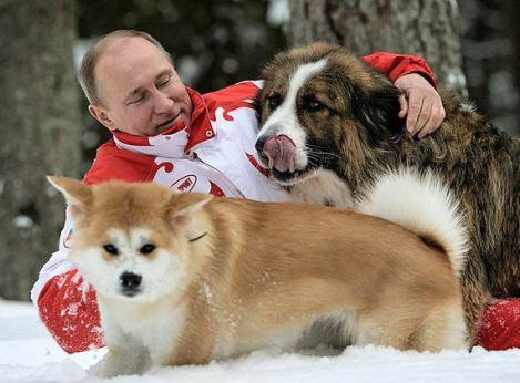プーチン大統領、秋田県知事から贈られた秋田犬「ゆめ」と遊ぶ … ロシア大統領府が写真公開 (画像あり)