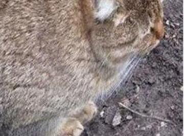 太りすぎて別のナニカになってしまいそうなネコが激写される (画像)