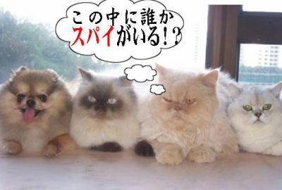 「まったく可愛くないネコ画像」 … ブサ可愛すぎると話題に (画像)