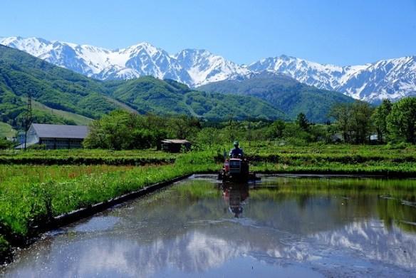 【画像】日本一美しい村が美しすぎてヤバい