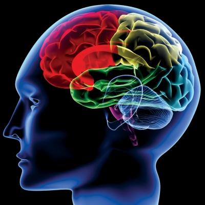 人間の脳ミソって20%も使ってないらしいじゃん???
