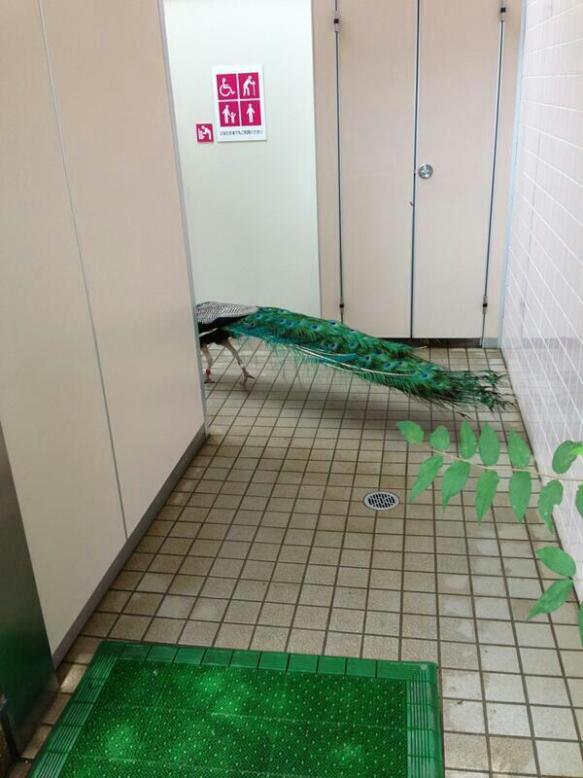 【驚愕】トイレにヤバイ生き物がいるんだがwwwwwwwwwwwwwwww
