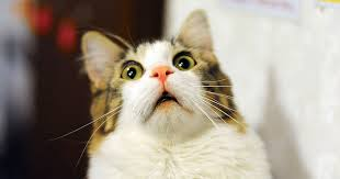 【画像】ネコちゃんは人間の事をでかい猫と認識してるらしいwwwwwwwwwwwww