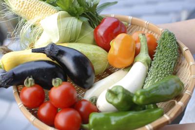 野菜の価格めっちゃ上がってね・・・・・・?
