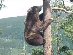 バカ「あ、熊だ!ここは死んだふりして乗り切るでwwwwwwwwww」