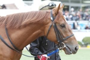 【競馬】 コパノリッキーさん(547kg)、『ブヒブヒ』と鳴いて他厩舎の馬に迷惑をかける