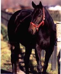 【競馬】 1992年のエリザベス女王杯(GI)を制したタケノベルベット死去