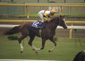 【競馬】 ヤエノムテキ号が死去… 公式支援団体公認ブログが発表
