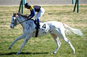 【競馬】 ひらがなが似合う馬名を書いてくスレ