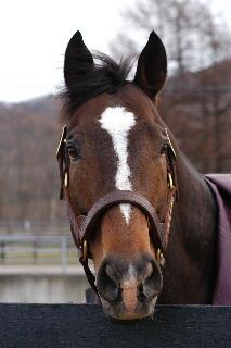 【競馬】 日本産種牡馬ディヴァインライト、繋養国トルコで死亡… G1・2着などを経て種牡馬入り、フランスで英1000ギニー優勝ナタゴラを輩出