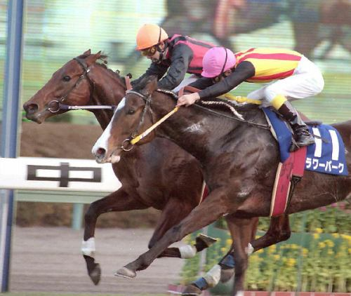 【競馬】 エイシンワシントンが死去… 右後肢脛骨の骨折により予後不良と診断