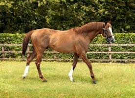 【競馬】 センスを感じた馬名をひたすら挙げるスレ