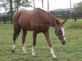 【競馬】 バンブーメモリー(牡29歳)が老衰のため死亡 2年連続最優秀スプリンター受賞