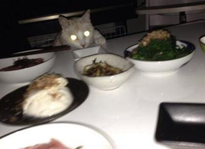 停電こわい!猫が!(画像) … 八王子市など東京の多摩地方南部で断続的に停電、原因は不明