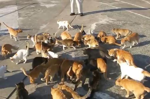 """話題の""""猫島""""は、本当に""""猫の楽園""""なのか? … 住民はたったの14人、それに対し200匹の猫が暮らす愛媛県の青島"""