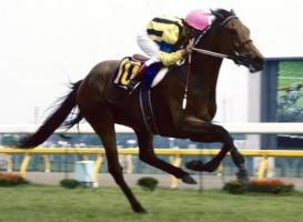 【競馬】 ダイナフェアリー死す、32歳老衰 重賞5勝の名牝