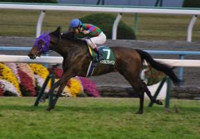 【競馬】 アンバルブライベンが高松宮記念行かないってマジ?