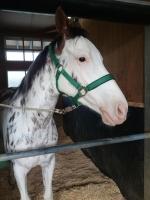 【競馬】 ブチコにつけられる種牡馬を考えるスレ