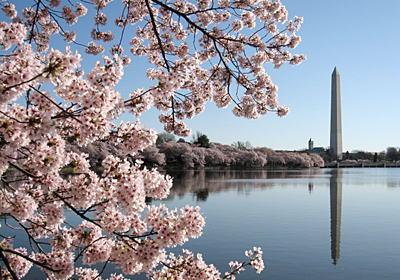 韓国人「1912年に東京市がワシントンDCに送った桜は韓国産に違いないから『日本桜』ではなく『韓国桜』という名前に変更しろ」 → 米国政府「東洋桜」への名称変更を提案