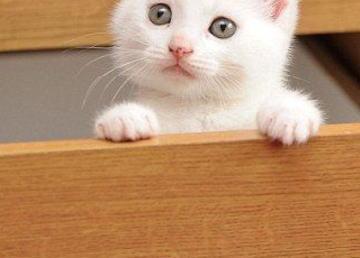 """いつも困っているように見える""""ハの字のマユ毛""""をもつ子猫が見つかる (画像)"""