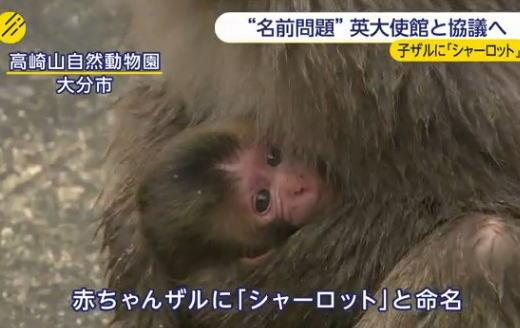 高崎山自然動物園の赤ちゃんザルに名付けた「シャーロット」の是非について、英大使館にお伺いを立てて結論へ … 英王室広報は「付け方は自由」