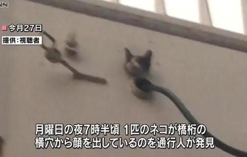 歩道橋の橋桁の中にネコが入り込む(画像) … 横穴から顔を出しているのを通行人が見つけ、発見から4日目で無事救出 - 岡山市北区の清心町交差点