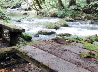 「奥入瀬渓流のコケテーブル」として人気のあったテーブルの苔、何者かにより剥がされる - 青森・十和田市奥入瀬渓流の「白銀の流れ」近くの遊歩道沿い