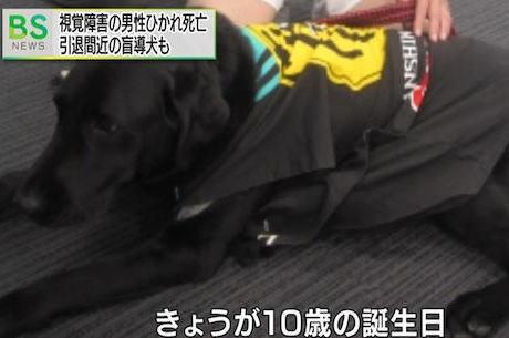 盲導犬と歩いていた山橋衛二さん(50)、バックしてきた2tトラックにひかれて盲導犬諸共死亡 … 盲導犬「ヴァルデス」は3日が10歳の誕生日、高齢のため今月11日に引退する予定だった