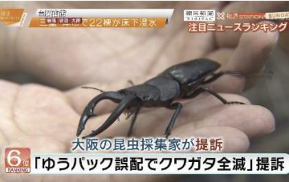 ゆうパックの誤送で荷物のクワガタ240匹全滅、日本郵便に対し賠償責任を認定し7匹分5600円の支払い命令 - 大阪地裁