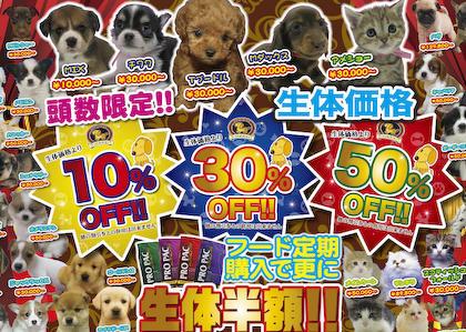 動物愛護活動家のタレント・杉本彩(47)「クリスマスにプレゼントとしてペットを買わないで」→ 「責任持って飼うからいいだろ」と批判を浴びる