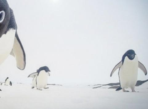 """驚くような写真術を見せてくれるナショナルジオグラフィック、2015年""""奇跡のベストフォト""""の一枚に選ばれたペンギンの写真が話題に(画像)"""