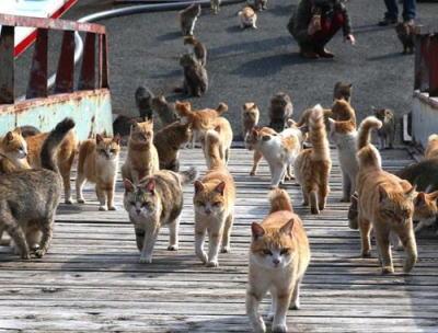 島民15名に対し100匹以上の猫が住む愛媛県の青島(猫島)、たくさんの猫さんが整列してこっちを見ている写真が話題に(画像)