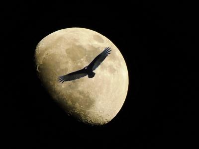 海辺のホテルで満天の星空と月明かりの下で波のざわめく音を静かに聞いていたい
