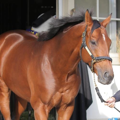 【競馬】 スピルバーグが引退、種牡馬に 藤沢調教師「潮時かな」