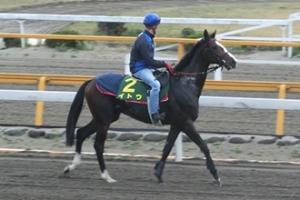 【ジャパンC】 イトウ陣営「今年の日本馬は去年より弱い」