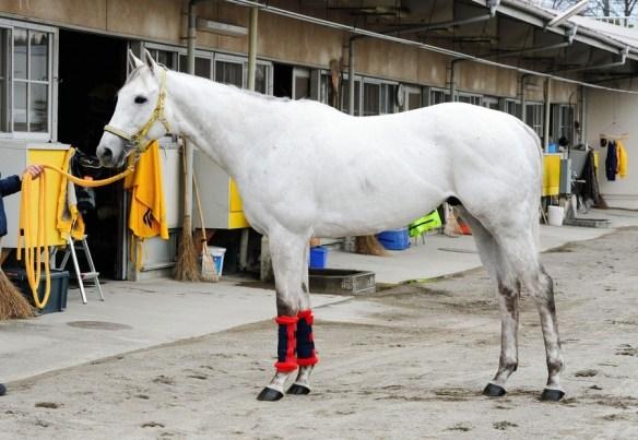 【競馬】 スノードラゴン、白すぎワロタwwwwwwwwwwwwwwwww