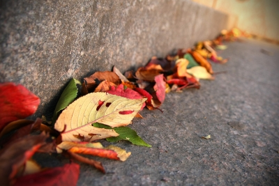 オーディオマニア音の変化に秋の訪れを感じる。涼しくなってくると音が良くなる理由とは?
