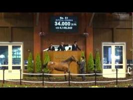 【競馬】 サラブレッド以上に高く売買される動物っているの?