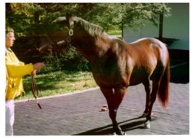 【競馬】 シーキングザゴールド死亡。31歳。