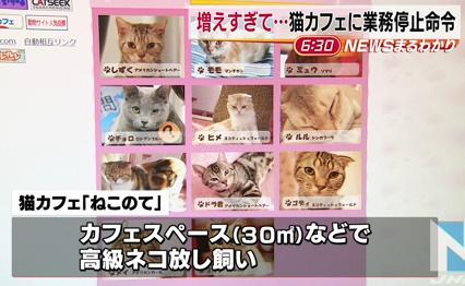 墨田区の猫カフェ「ねこのて」に全国初となる30日間の業務停止命令 … 広さ6畳ほどの部屋で62匹の猫がひしめき営業衛生状態が悪化、2月の業務改善命令に改善の兆候が見られず