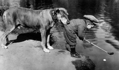 golf-dog