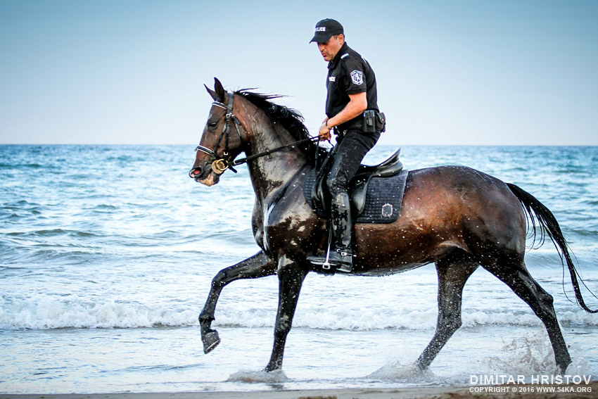 Wallpaper Girls Tatto Hd Police Horses Running In The Water 54ka Photo Blog