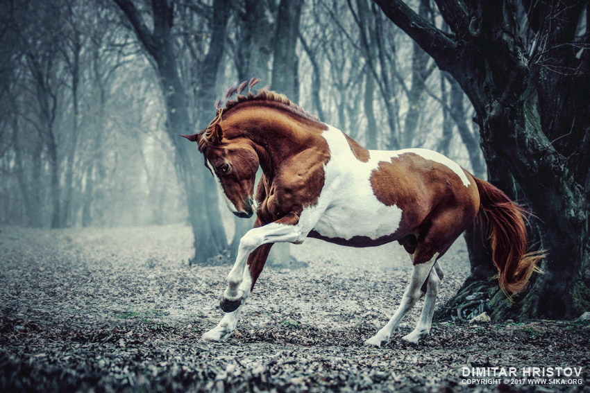 Natural Beauty Girl Wallpapers Paint Horse In The Frozen Forest 54ka Photo Blog