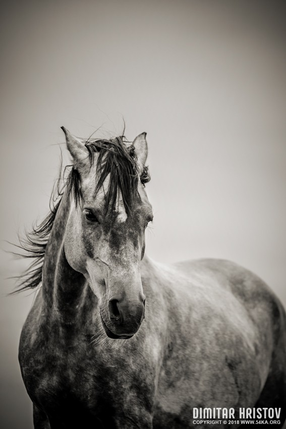 Beautiful Wallpapers Of Lonely Girl The Lonely Horse Portrait In Black And White 54ka Photo