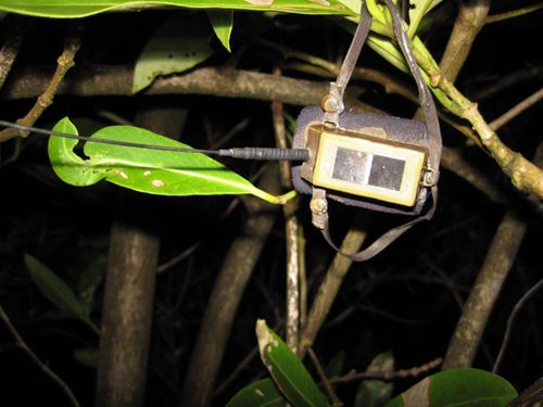 Goshens transmitter 600