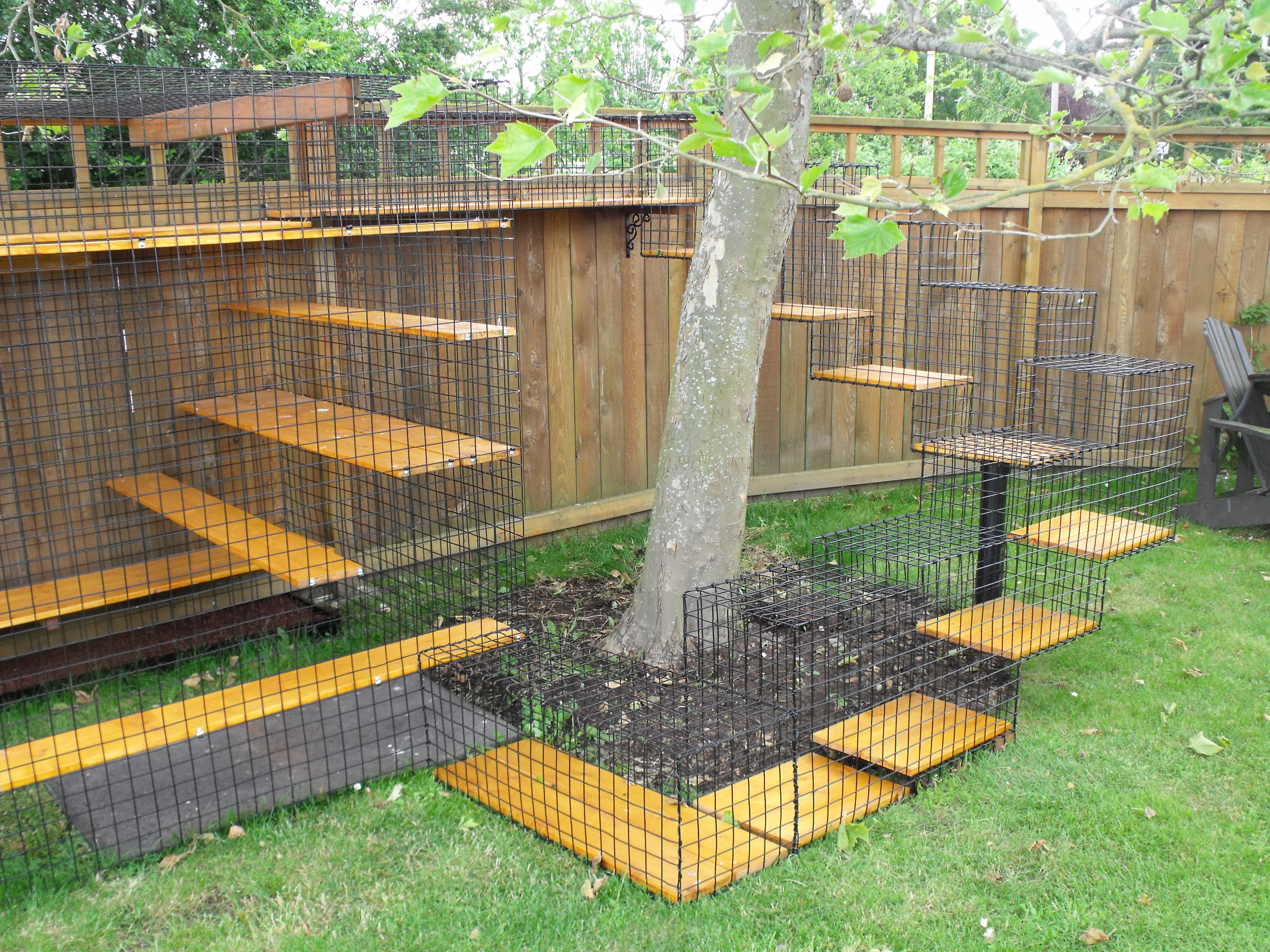 Backyard Enclosures For Cats : Cat enclosures are becoming more popular and provide a safe?for both