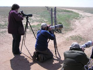 Photo - Folks birding at festival
